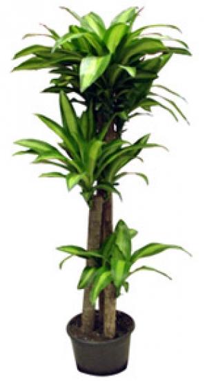 Ata eh r salon bitkisi saks i ekleri ata eh r orkide for Salon cicekleri yapay